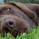 «Оскар»  в  мире животных (ВИДЕО)