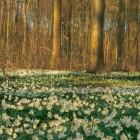 Весна смешные и курьезные фото (33 фото)