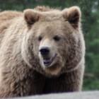 Свозили медведя в кафе на свою голову