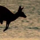 Эти невероятные животные — ТОП 10!!!