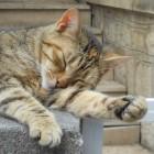 Японцы создали Кошкин дом счастья (ВИДЕО)