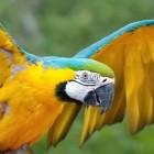 Попугай освоил смартфон