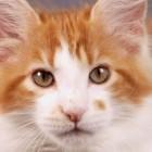 Самый смелый кот спас мальчика от собаки! (Видео)